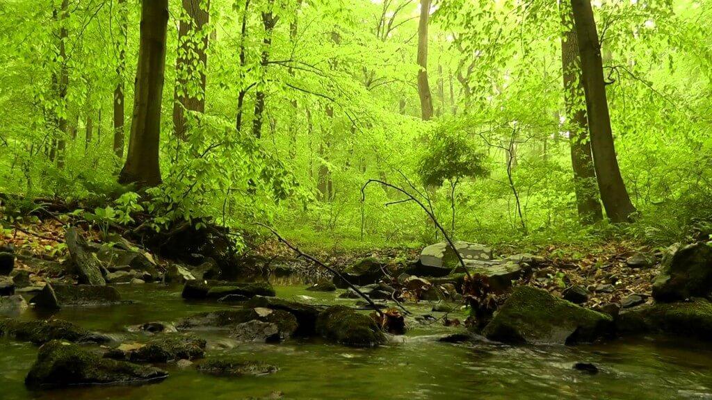acufeni suoni della natura