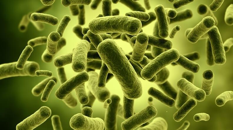 batteri e orecchie alla Primavera